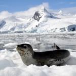 Antarktis,  Dr. R. Scheiper