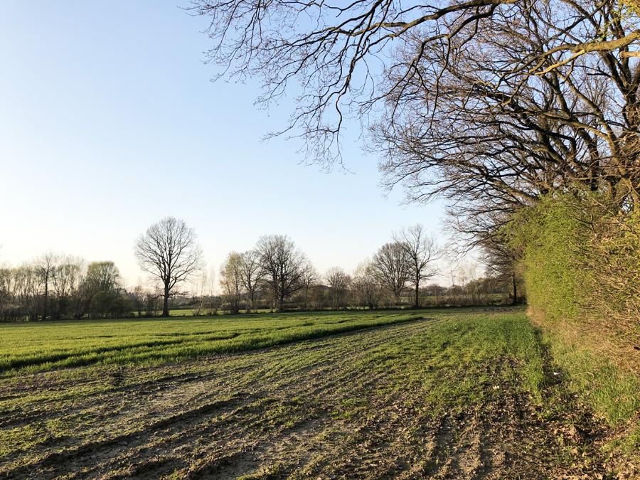 Rot-Grüner Senat: Weitere Bebauung der Hummelsbütteler Feldmark geplant
