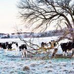 Polarluft zum Winteranfang