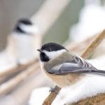 Wildvögel richtig füttern und Leben retten