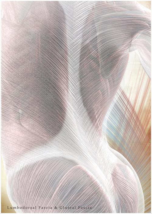 Faszien – Das unterschätzte Gewebe
